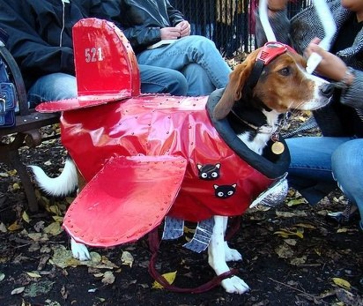 Dog dressed as airplane