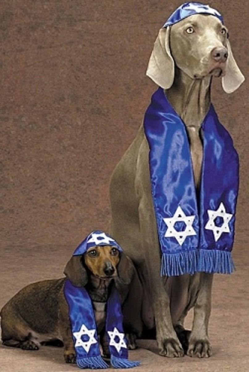 Weimaraner and Weiner Dog Dachshund in Costume