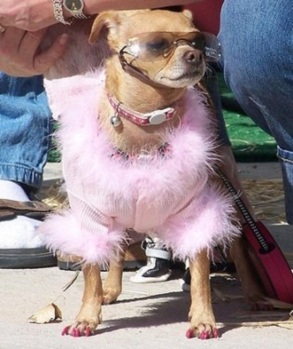 Foo Foo Dog in Pink Feathers