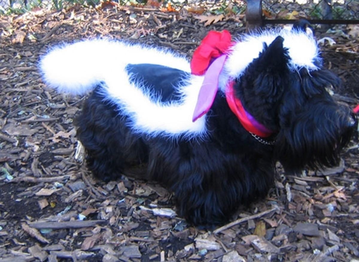 Dog dressed up as skunk