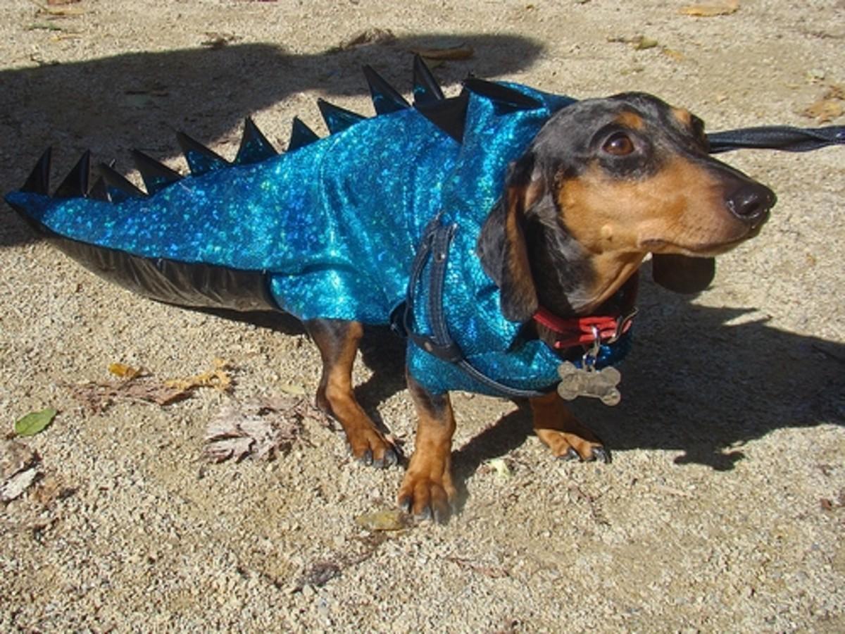 Dachshund dressed as dinosaur