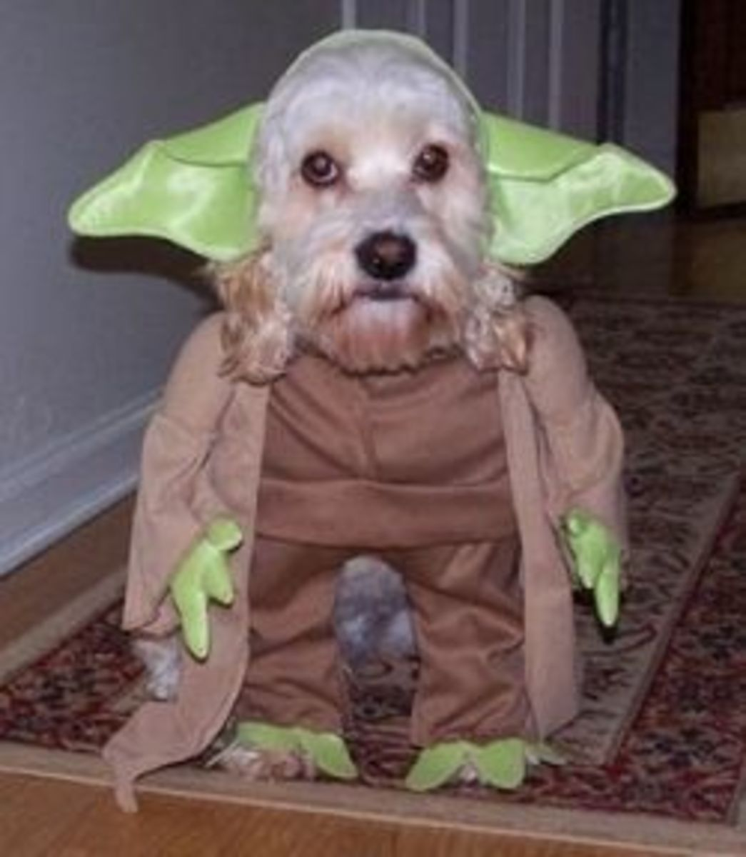 Funny Pictures of Dogs in Costumes