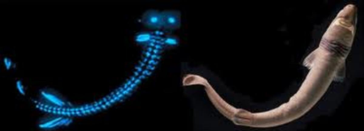 Shark lights