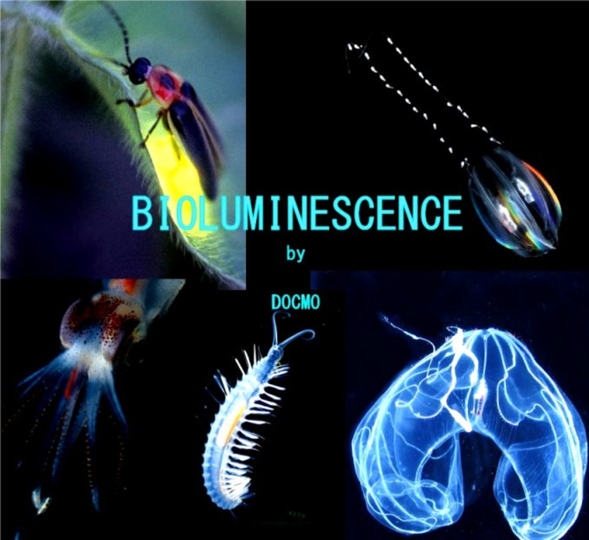 animals-that-glow-the-science-of-bioluminescence