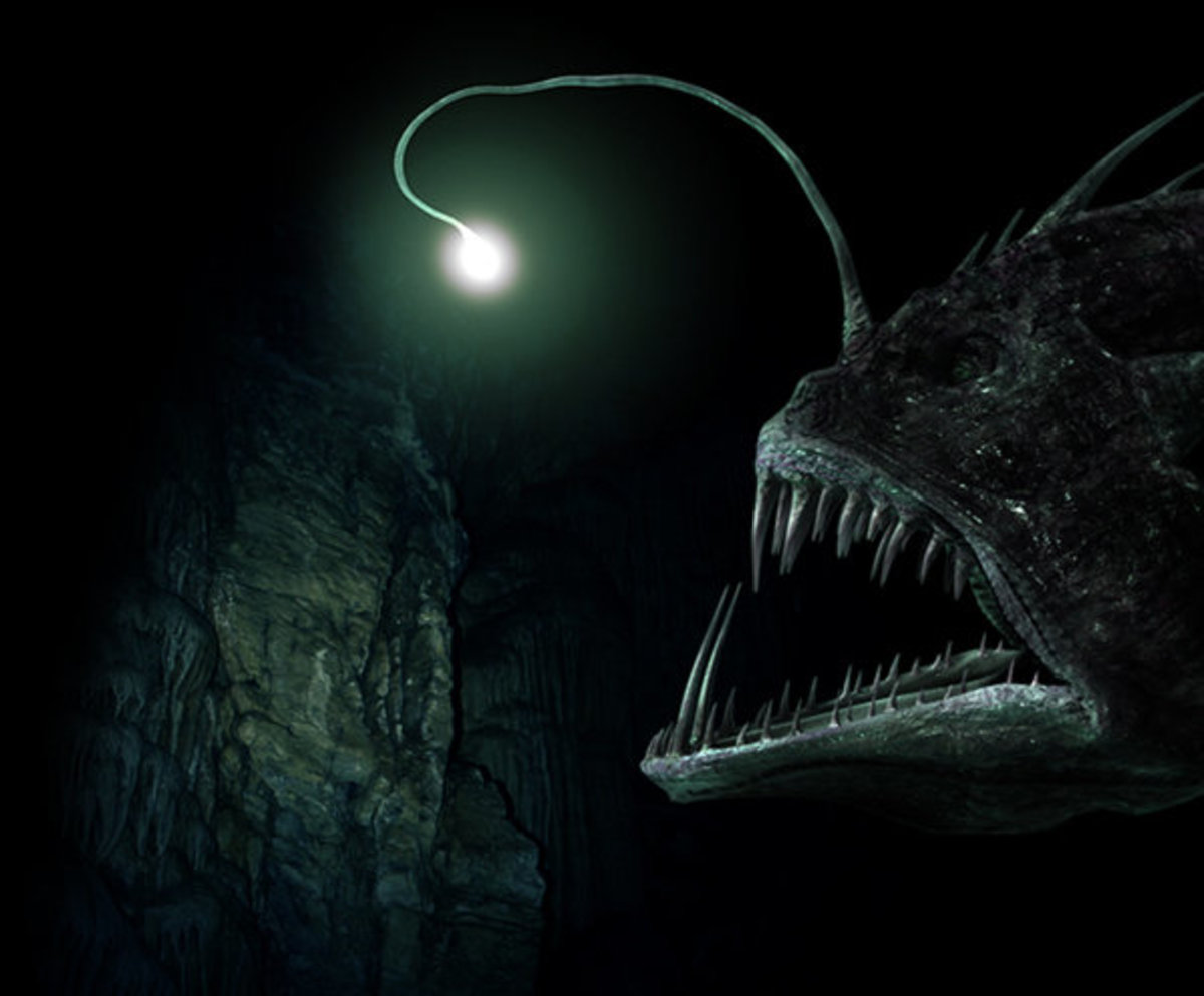 Angler Fish Luring Its Prey