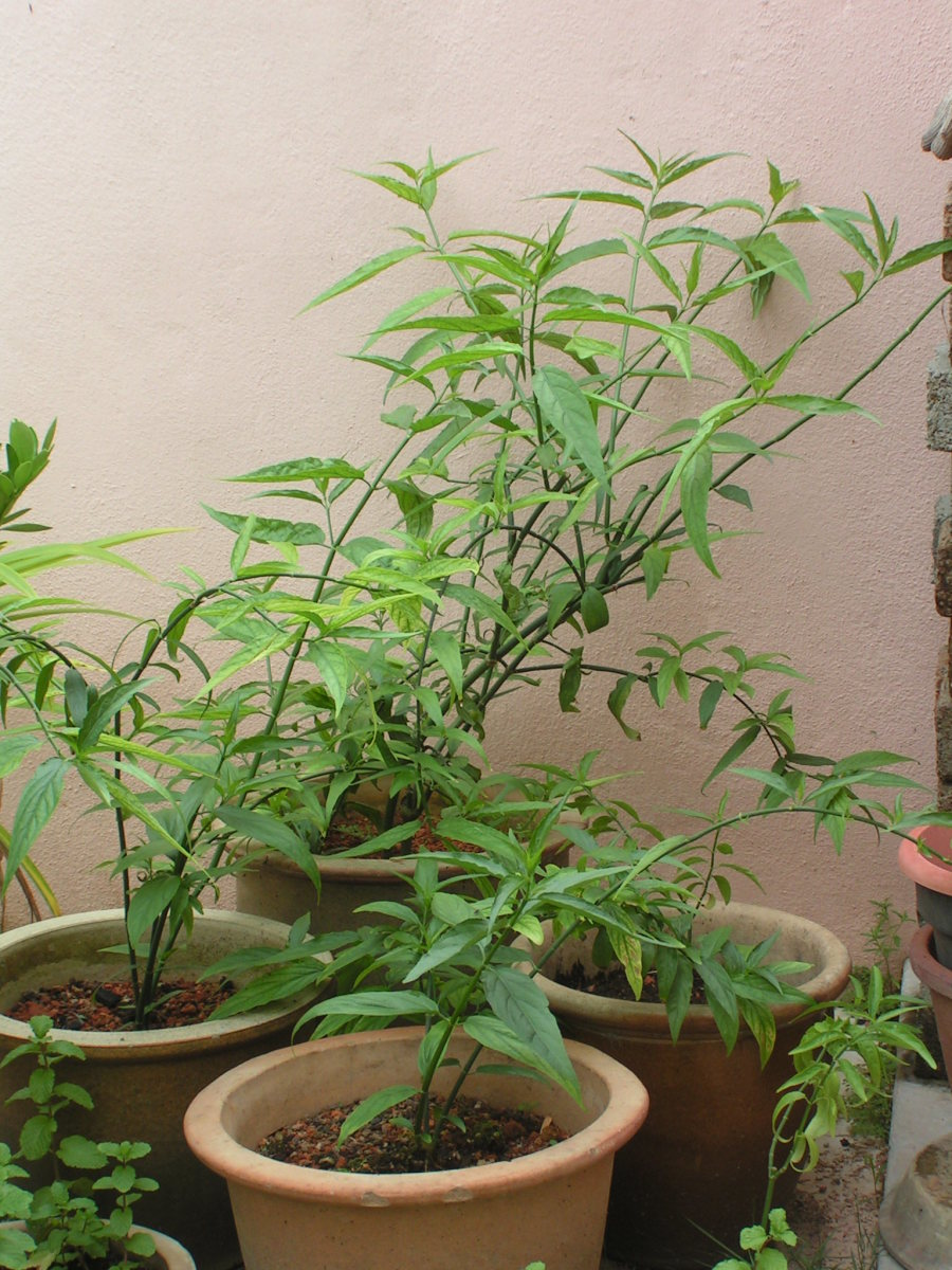 herbal-cure-for-cancer