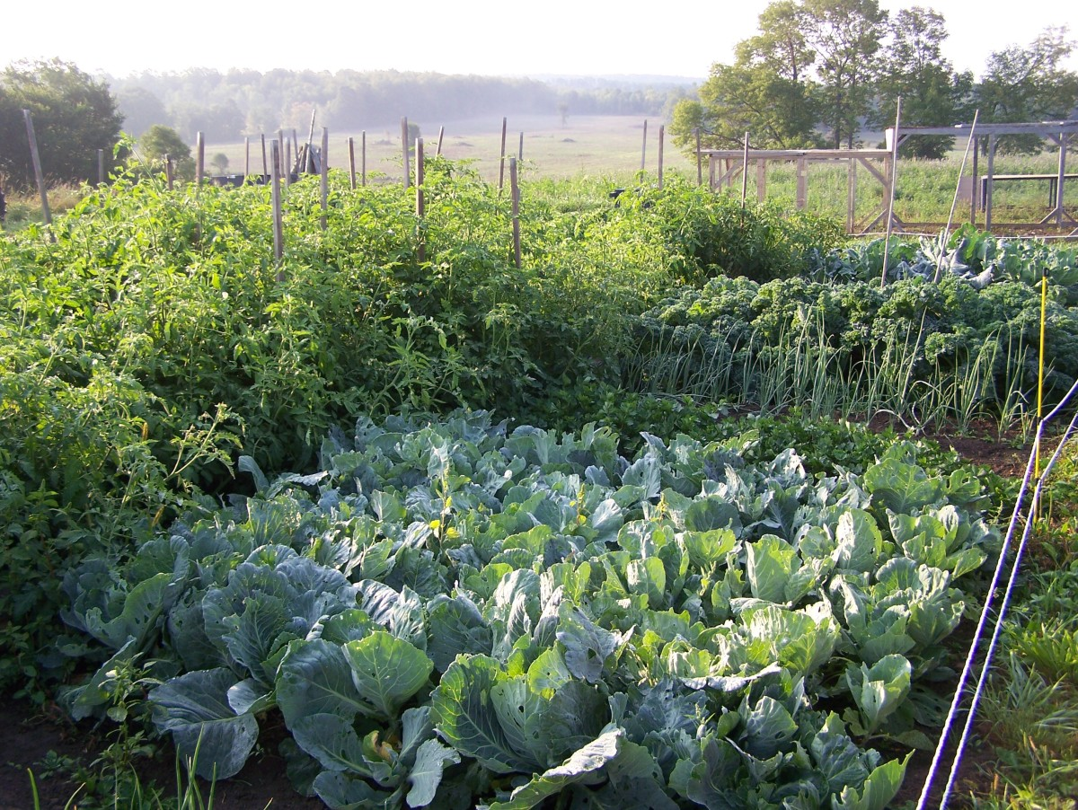 growingvegetables-vegetavles-vegetavle-organicgarden-veggiegardenplans
