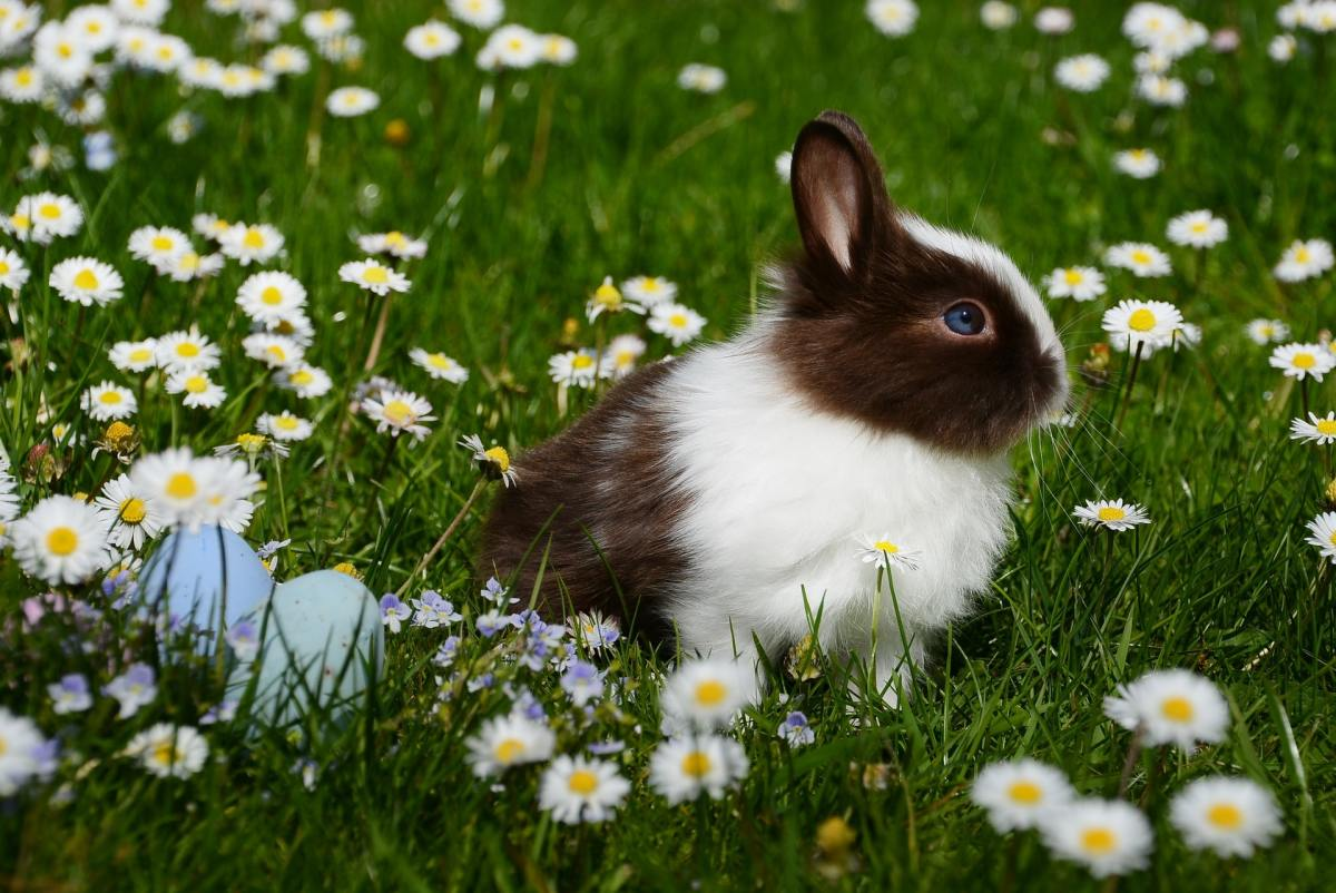 How to give medicine orally to your bunny rabbit