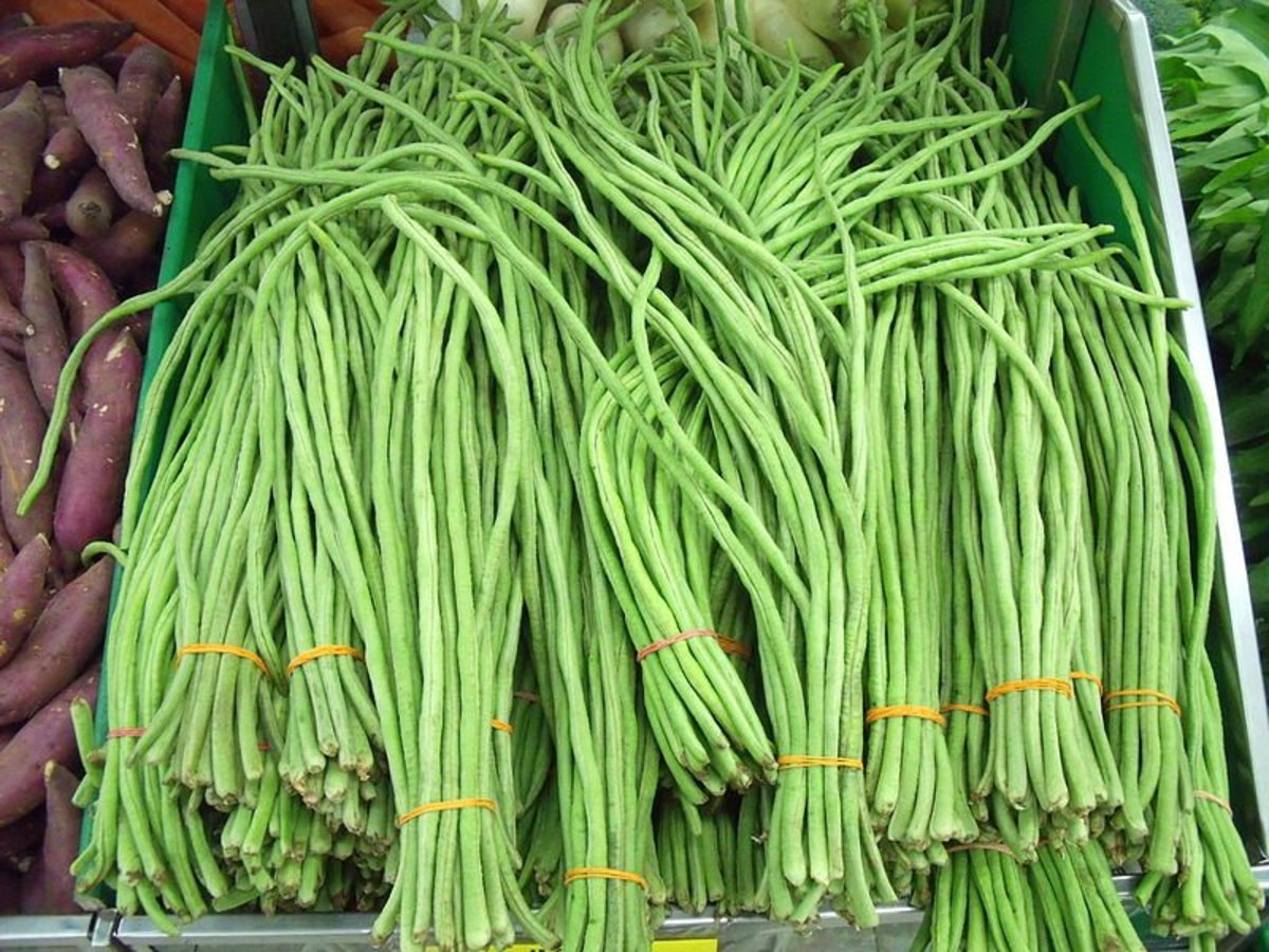 Yard Long Beans from China
