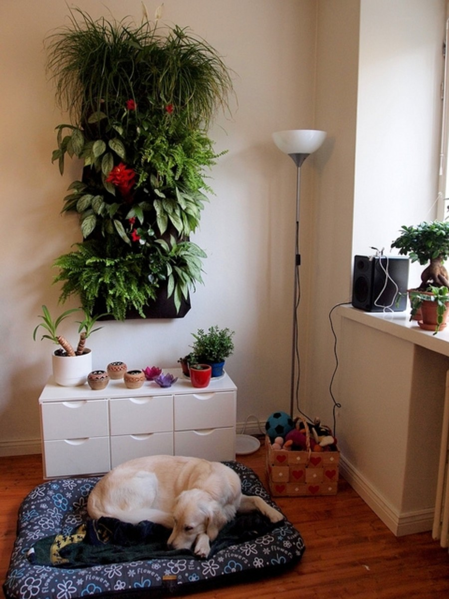 Keep your potted plants in hanging wall pockets for an indoor garden!