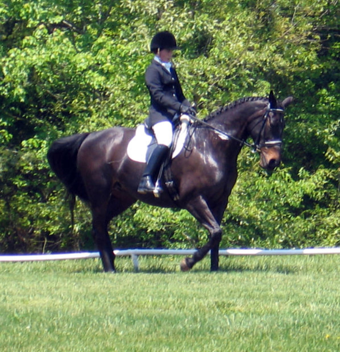 Walk Gait by an Equestrian Horse