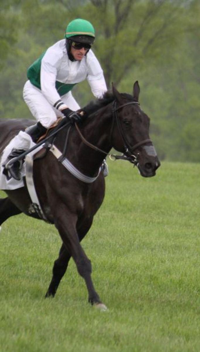 Pacing Gait  Horse Pacing