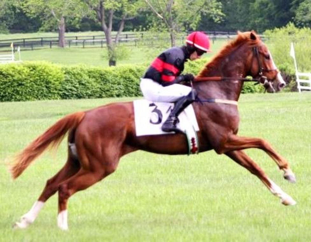 The Gallop done by a Racing Horse
