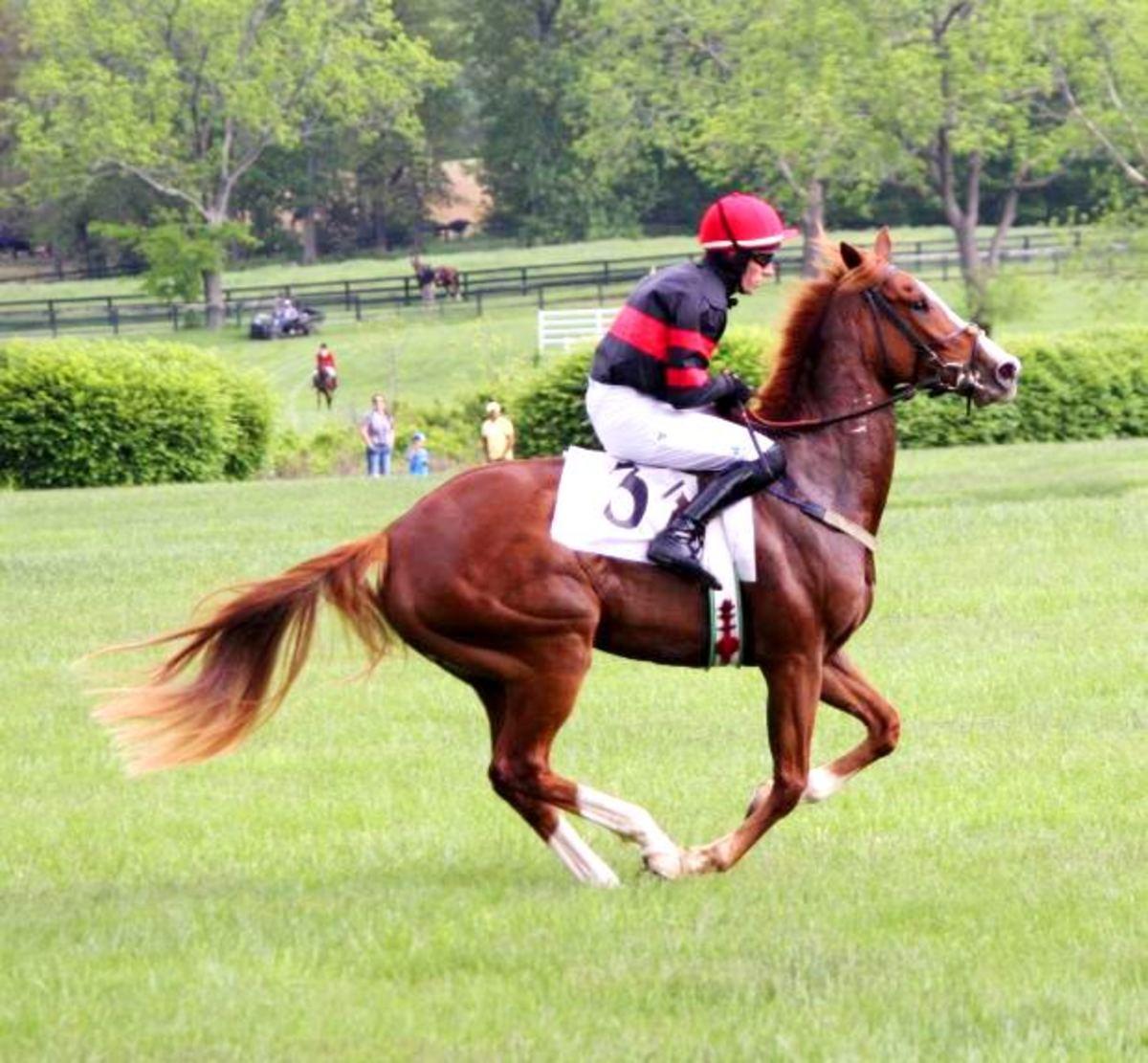 Horse Gallop Gallop Gait