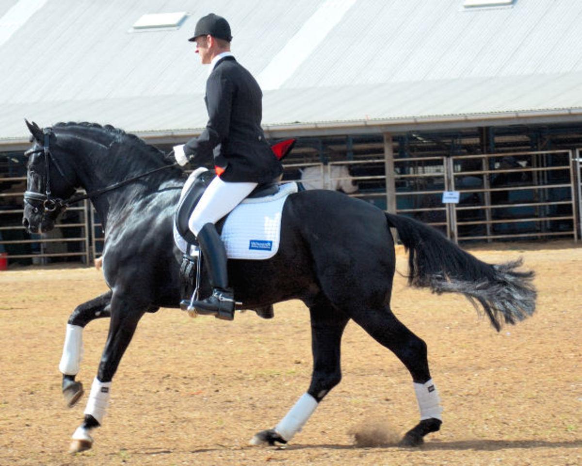 The Canter  Canter Horse Horse Canter