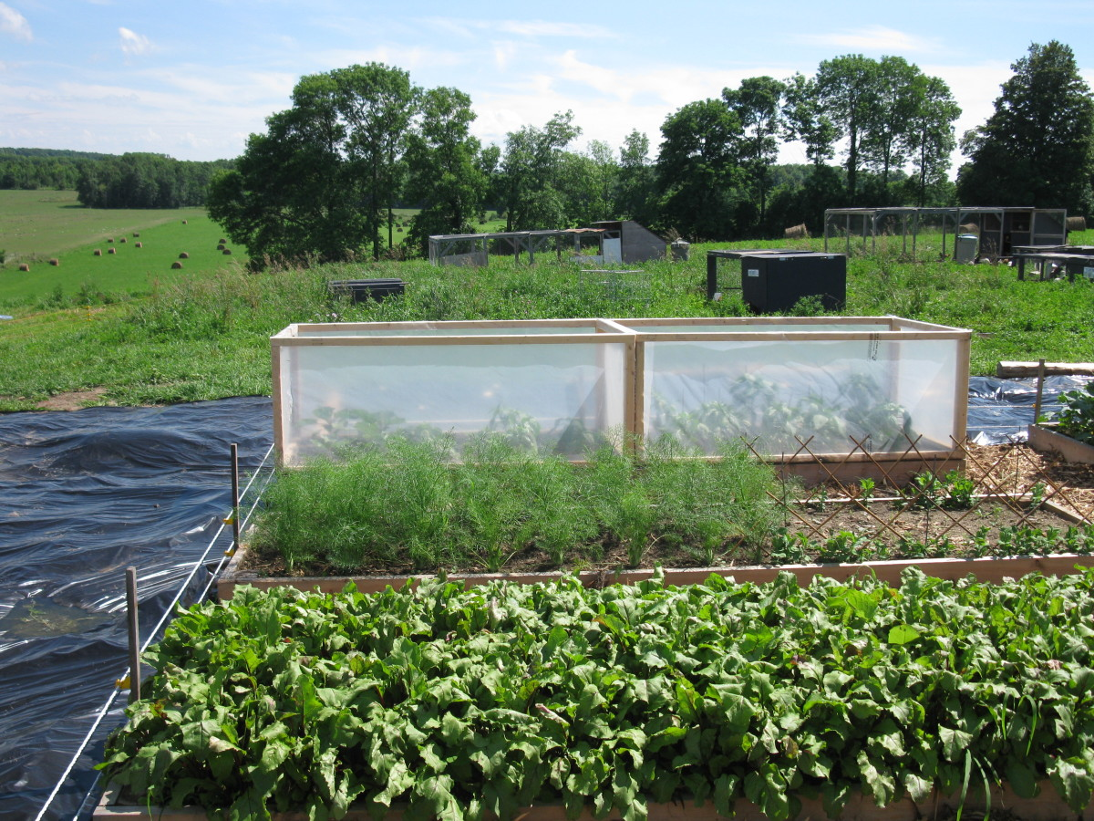 Light inexpensive cold frames for and early start and improving yields on peppers and basil