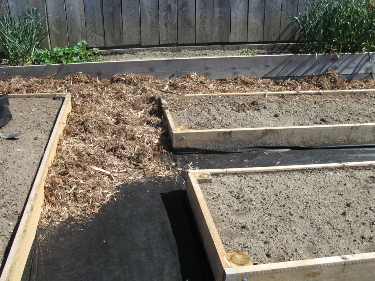 Building Planting A Raised Bed Garden For Growing Vegetables
