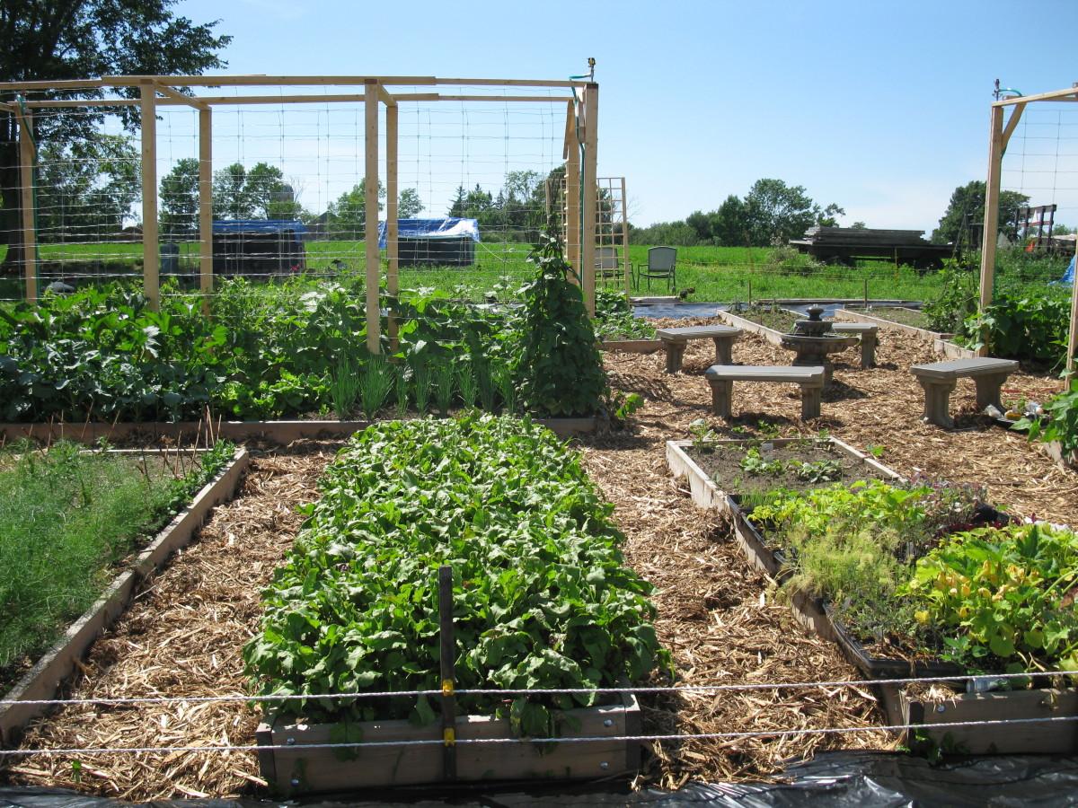 An ornamental raised bed organic veggie garden layout.