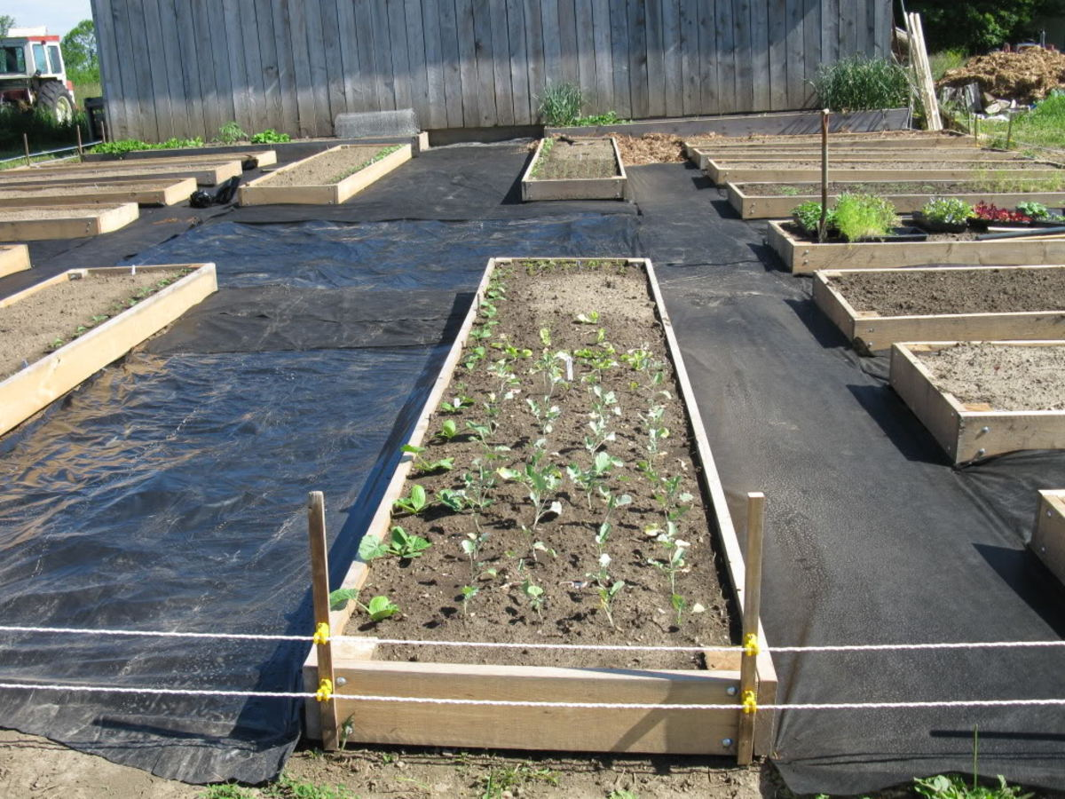 Basic layout of simple rectangular raised bed gardens