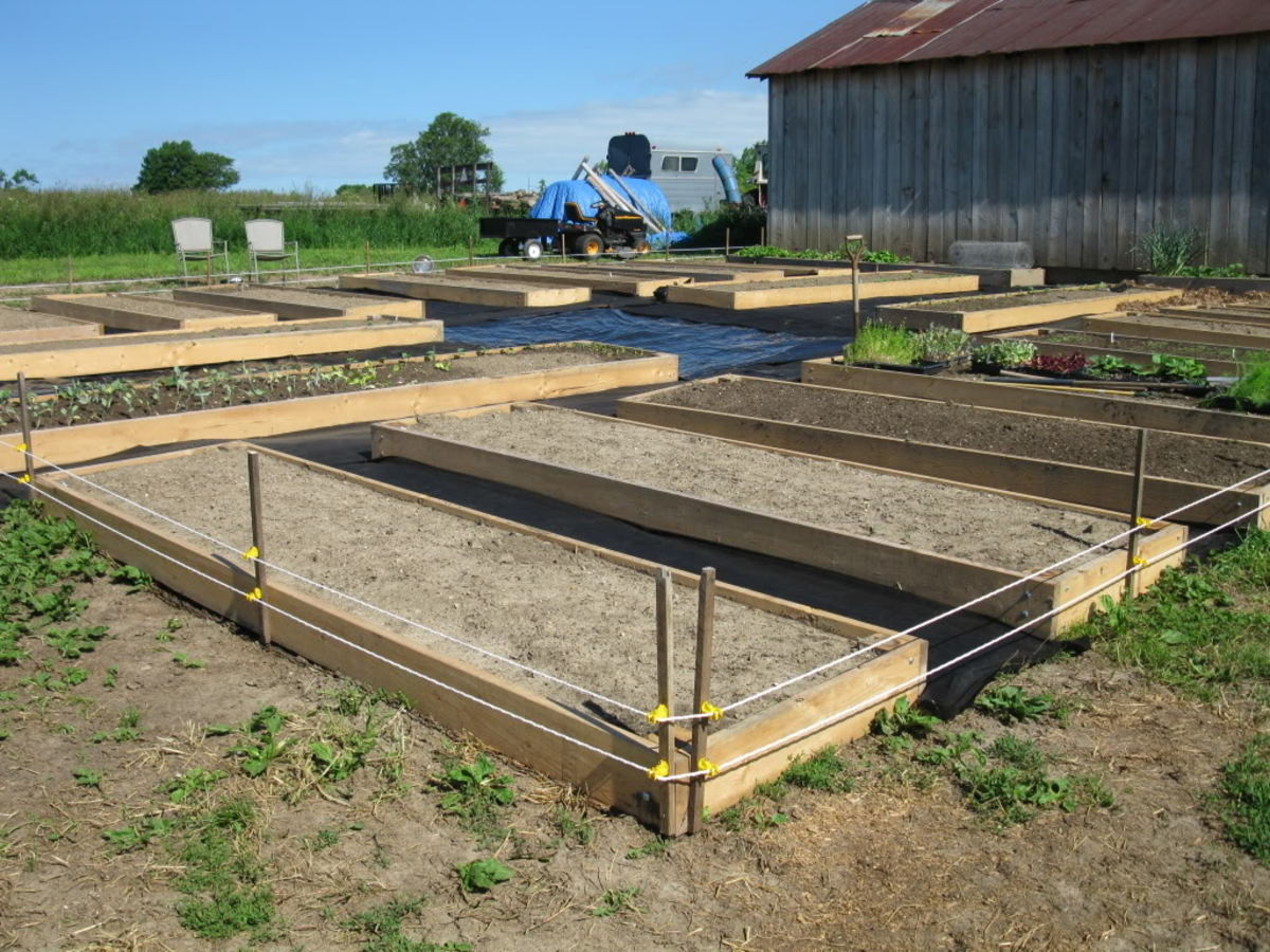Newly filled raised garden beds with 2 lines of electric to keep free range chickens and wild pests out