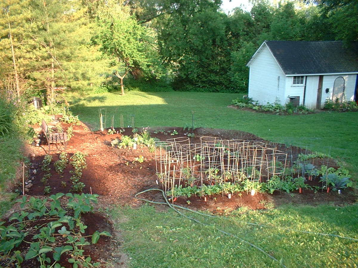 Our second raised bed garden the year before we put wooden beds in
