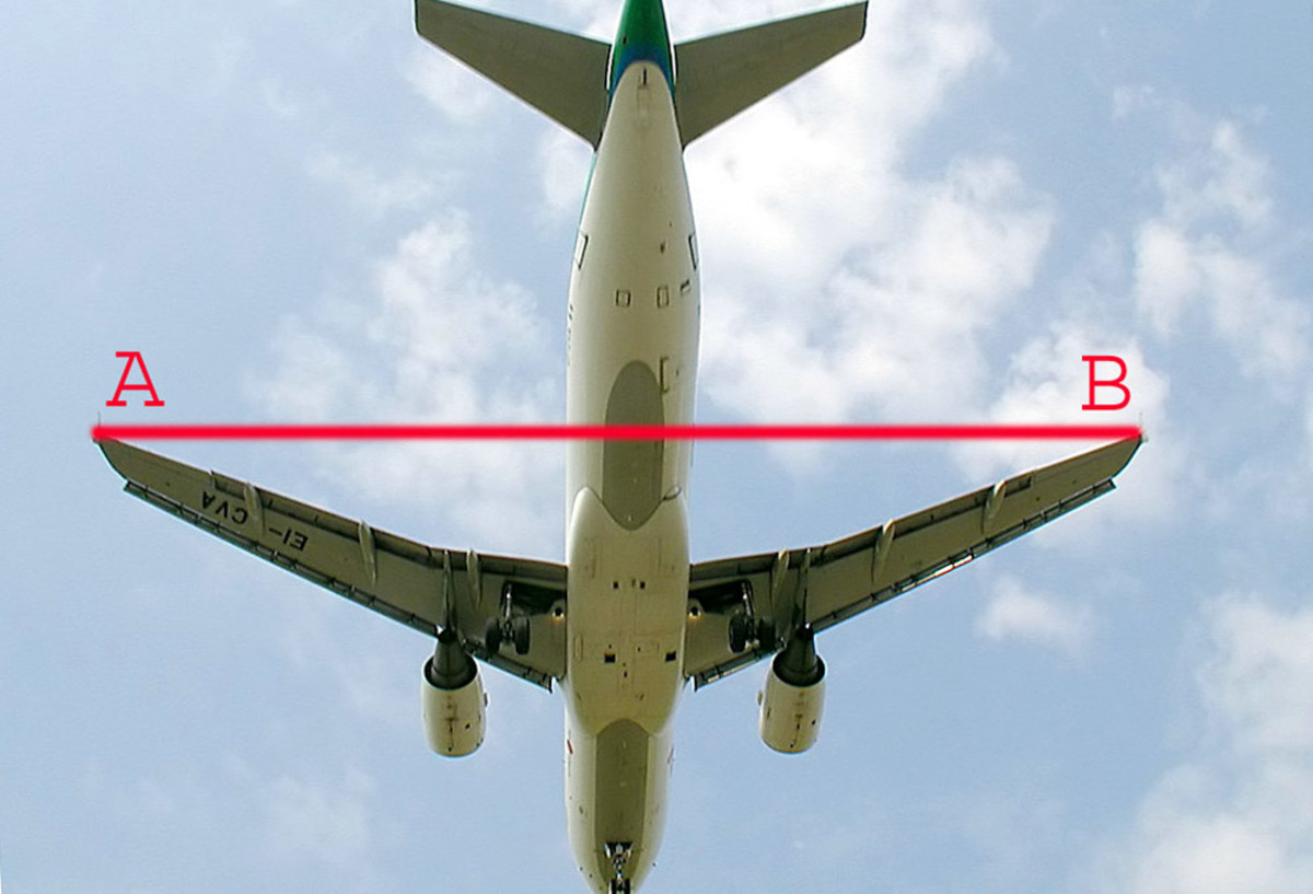 Diagram illustrating wingspan.
