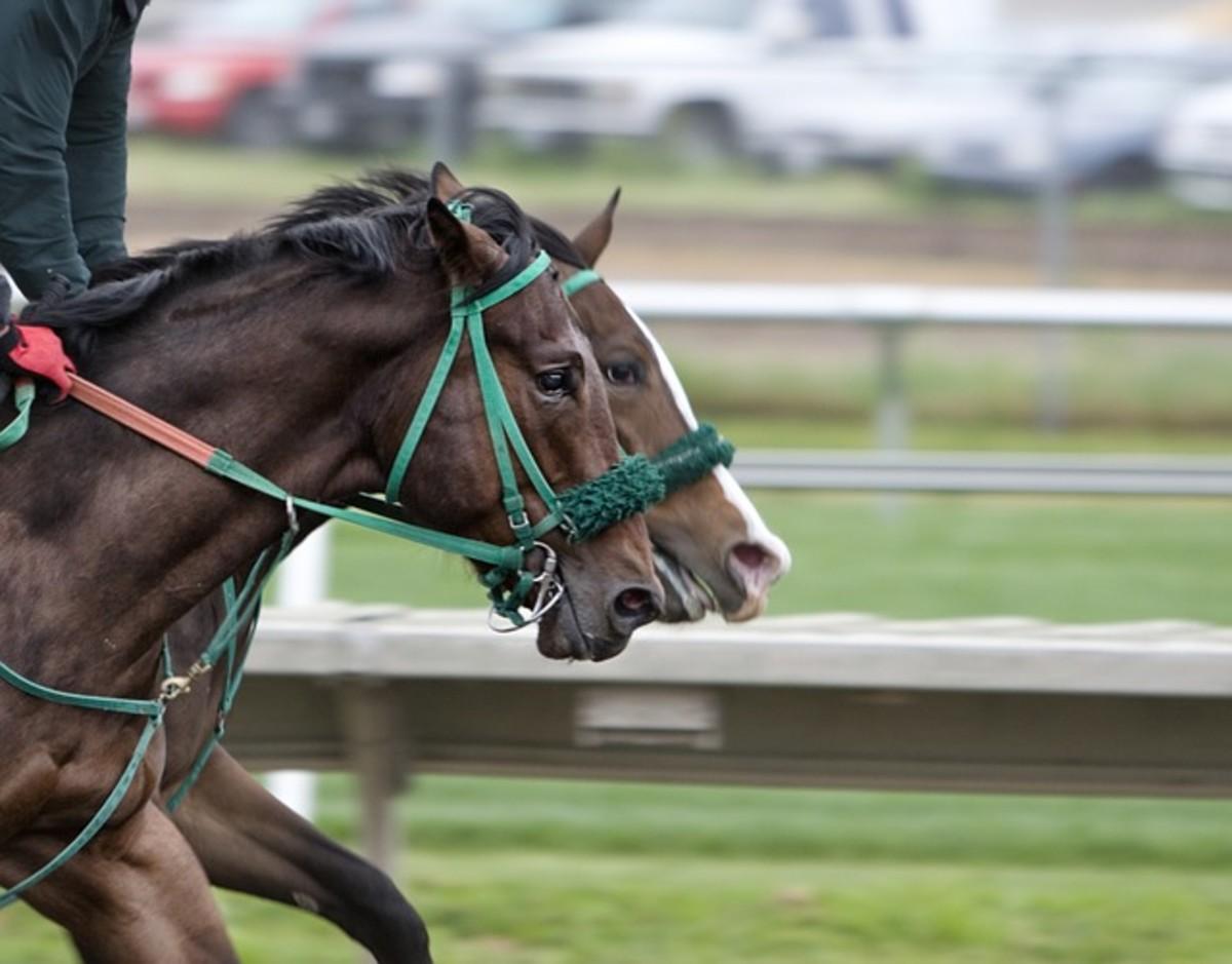 Racing horses.