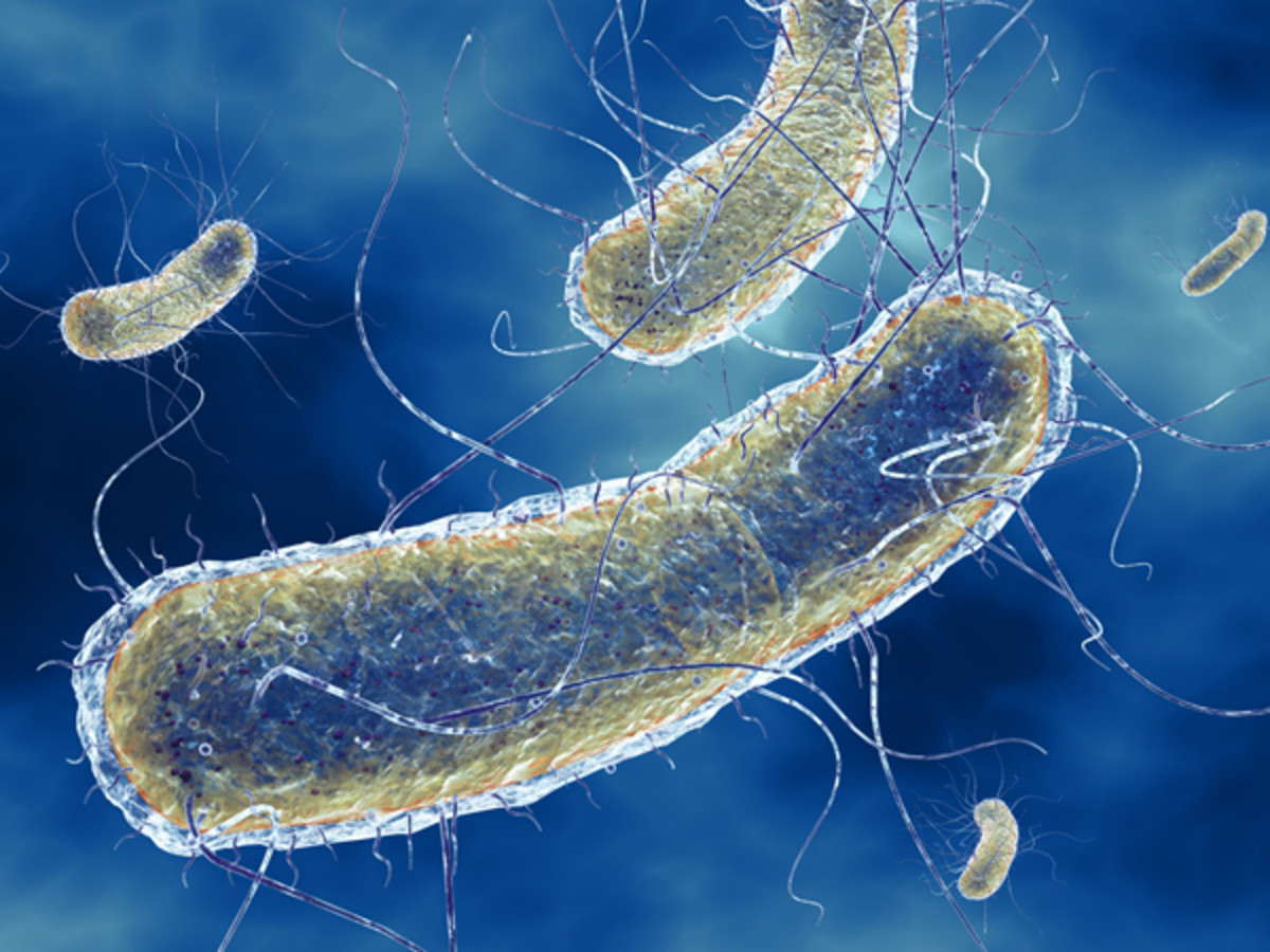 E. Coli bacterium with hair-like projections