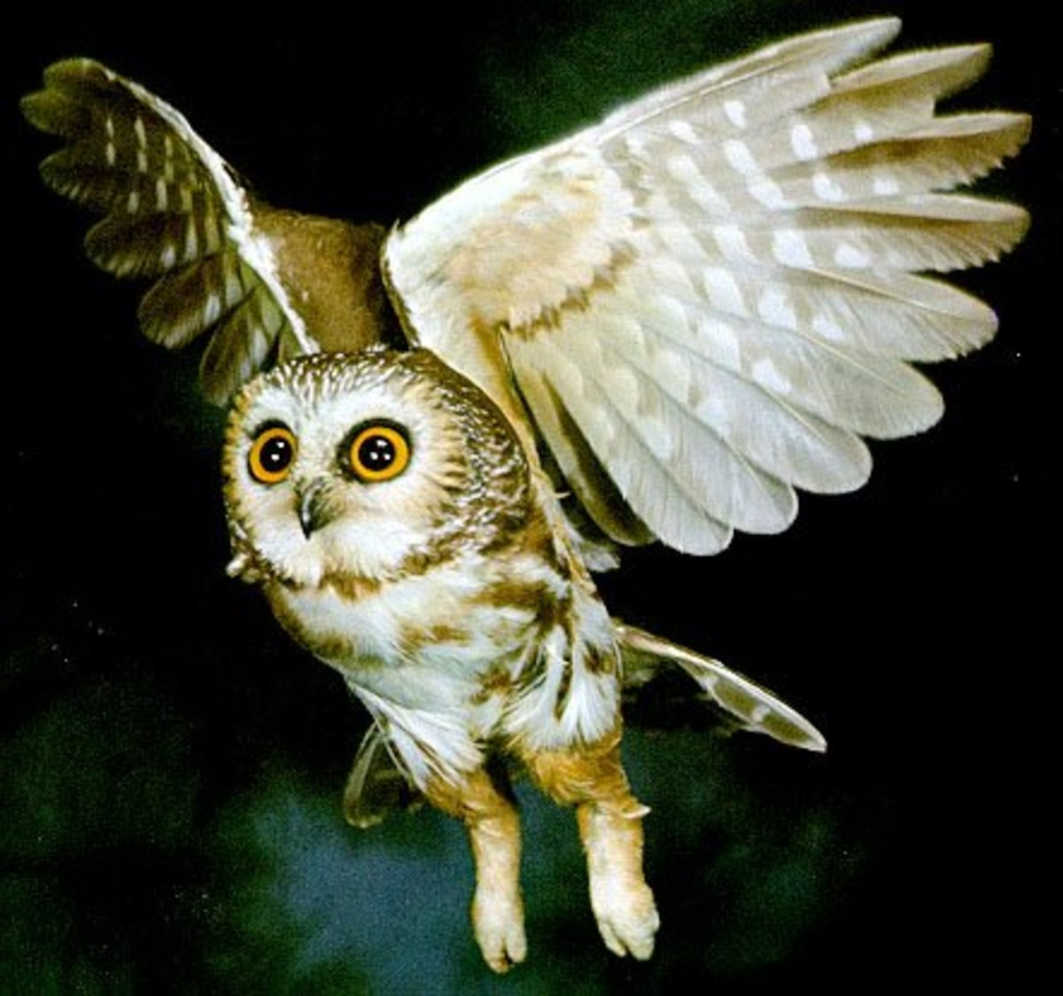 Being nocturnal animals, an owl is the symbol for those that enjoy staying up late.