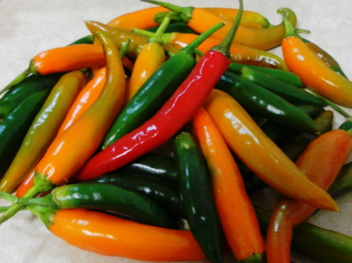 Chillies of different colours