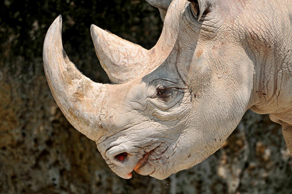 world-rhino-day