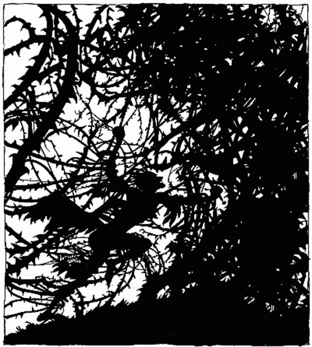 The brambles from Sleeping Beauty by Arthur Rackham