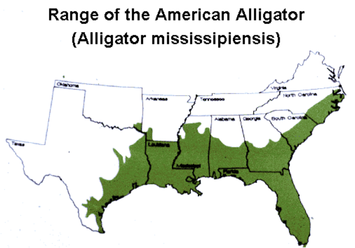 Alligator Habitat