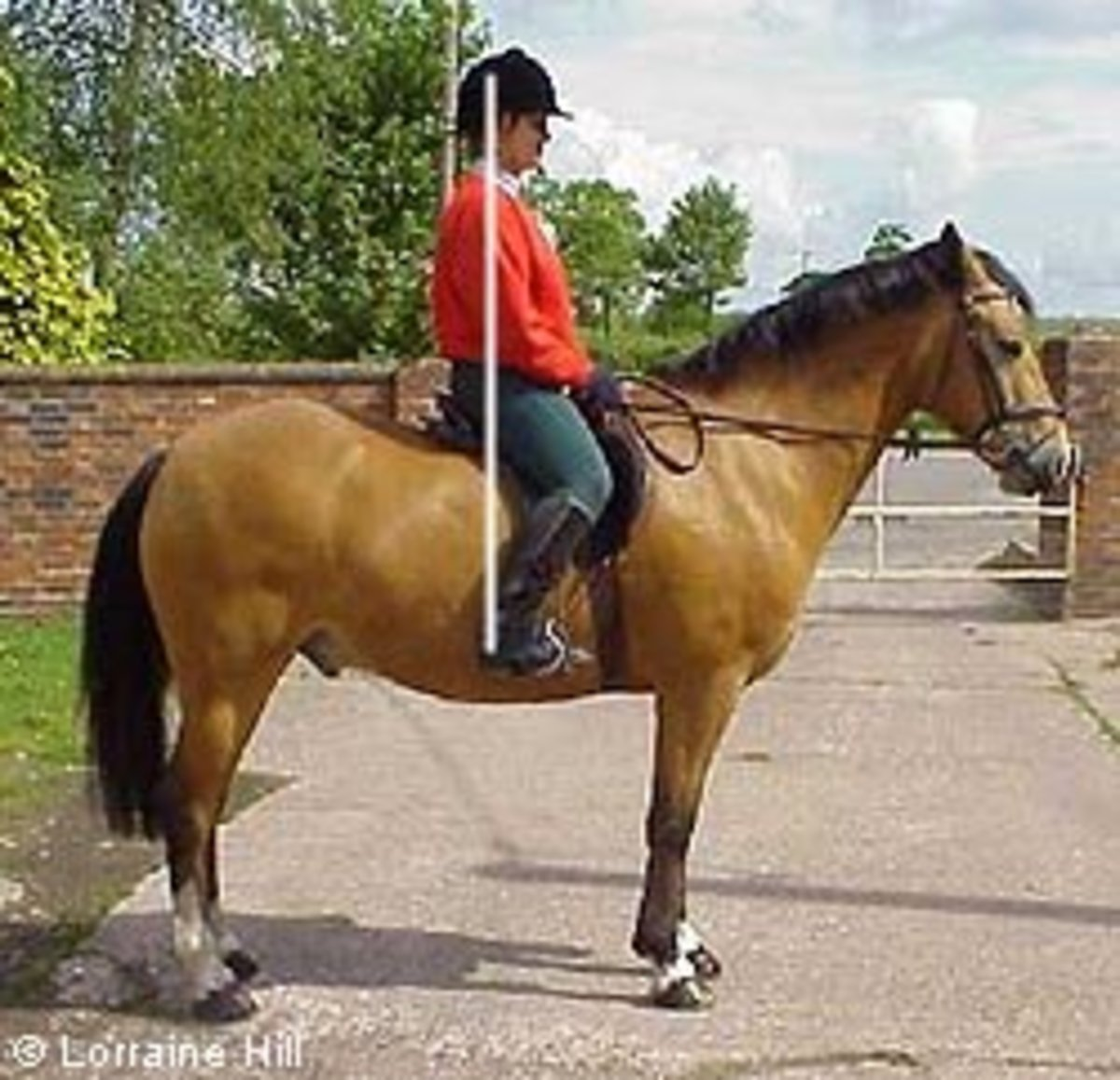 Horse riding position: The ankle, hips and ears are in line