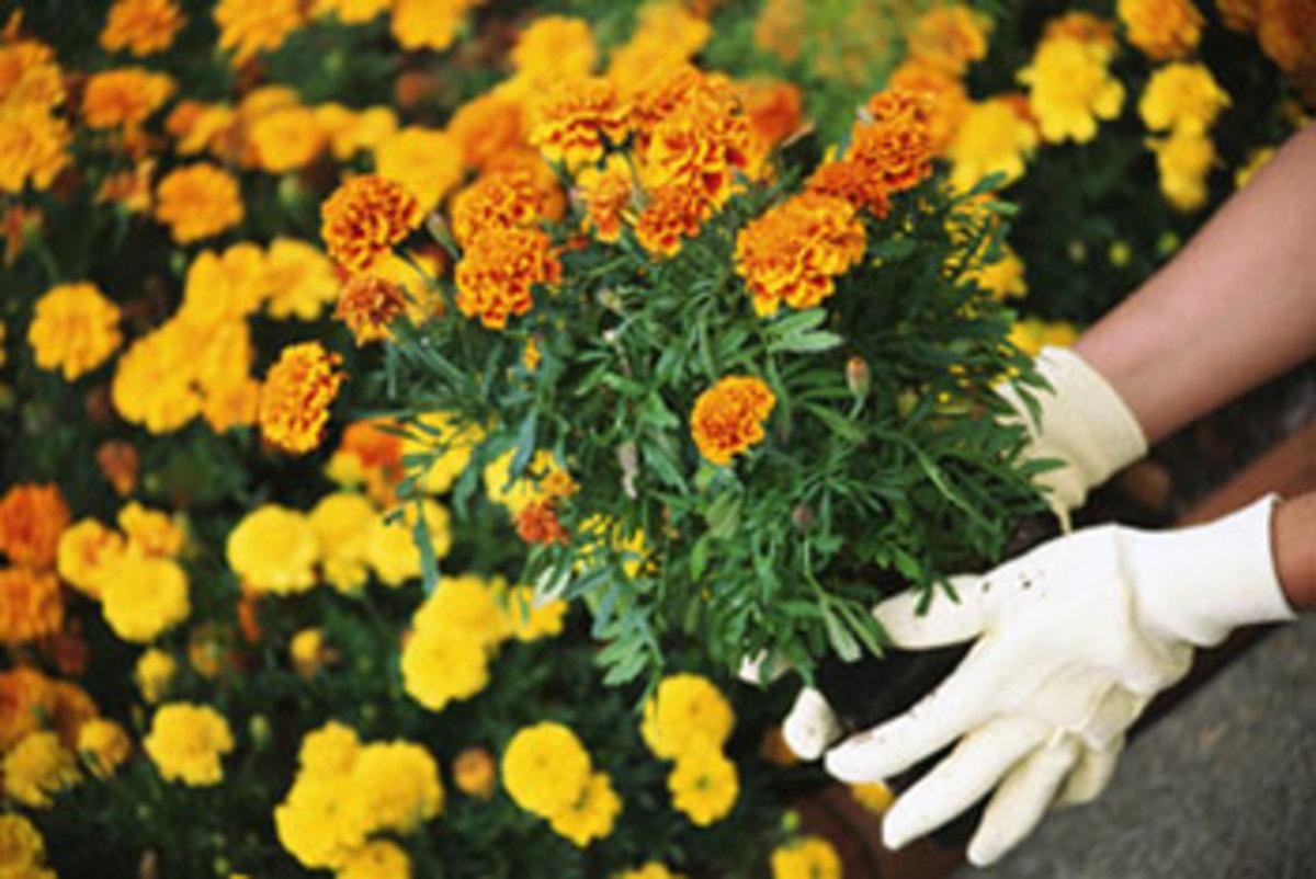 best-flowers-to-grow