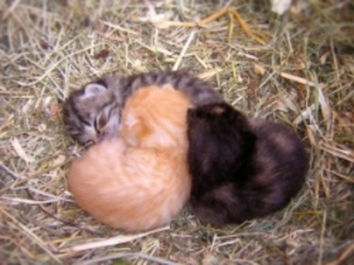 Orphaned Kittens Cuddle to Stay Warm! (Michaelal Photo/Sxc.hu)