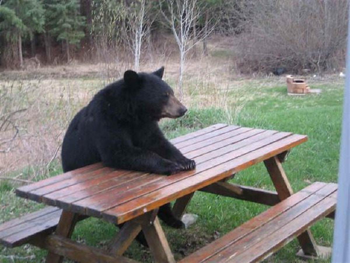 the-black-bear