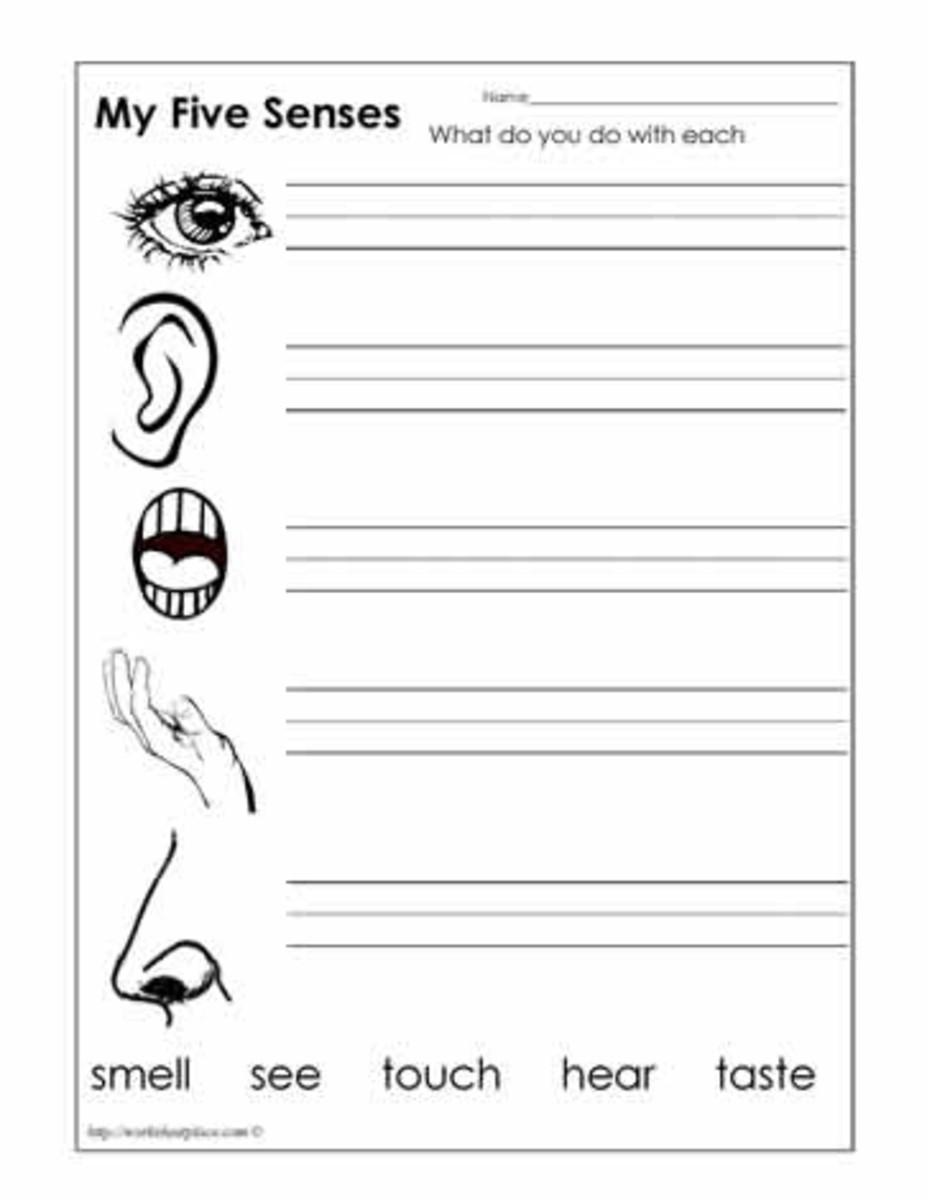 My five senses worksheet. Source:  worksheetplace.com
