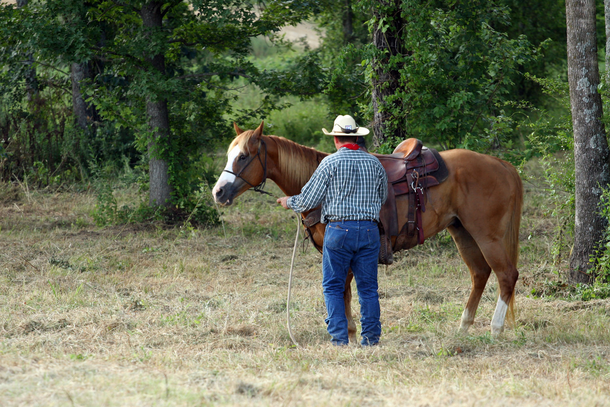 Quarter Horses are also among the most versatile horse breeds.