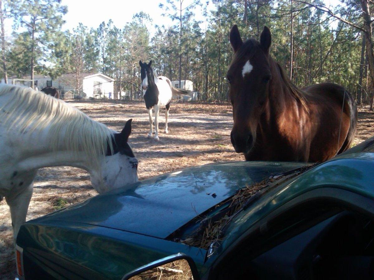 Best Horse Breeds for Kids
