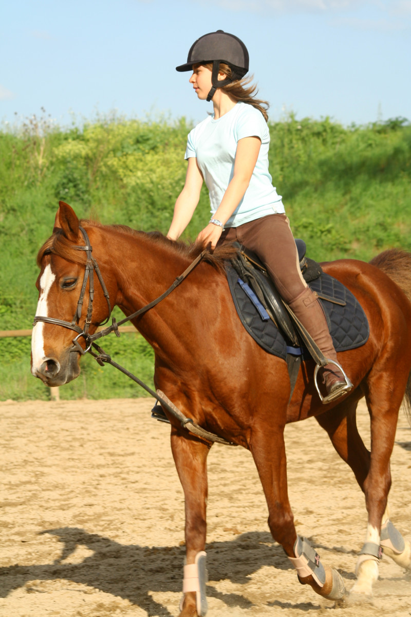 If your child is interested in showing, choose horse breeds with active youth associations.