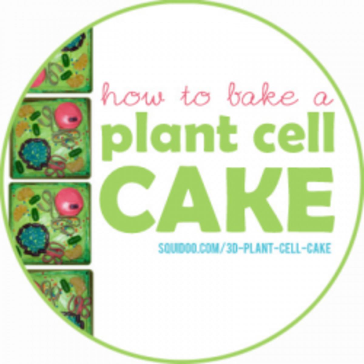 3d Plant Cell Cakes Hubpages