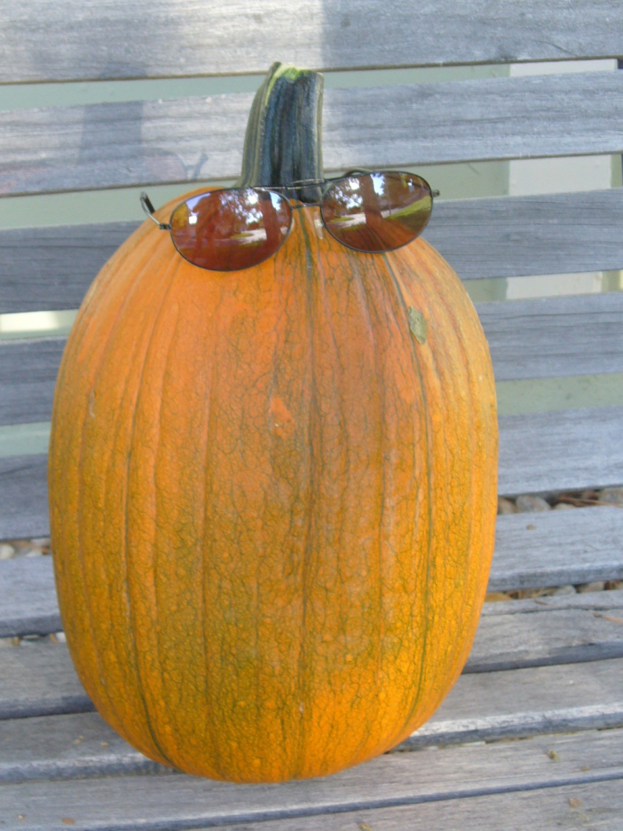 This derelict pumpkin snuck over from the neighbor's fence.