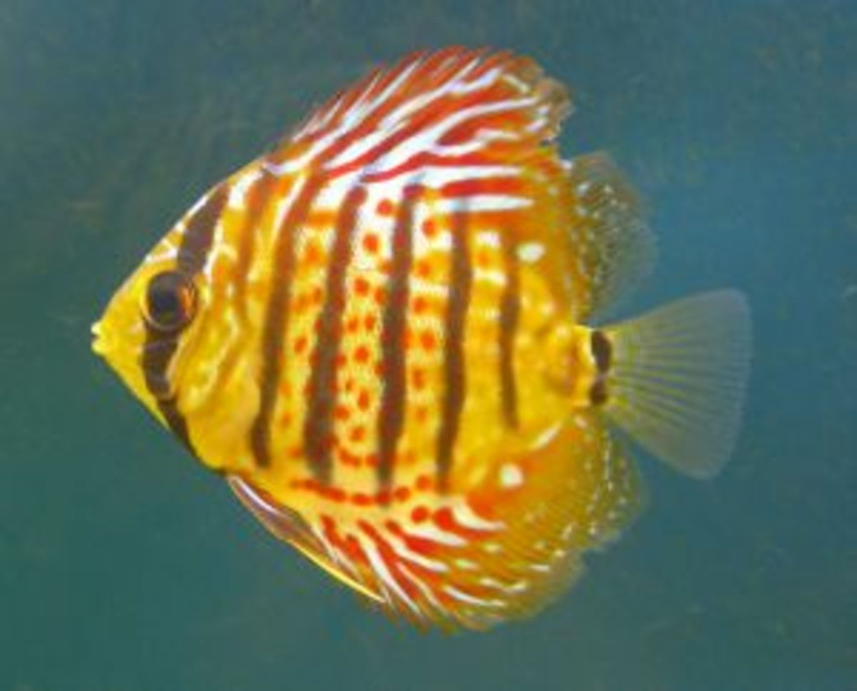25 Best Blogs covering Aquariums, Aquarists, and Tropical Fish