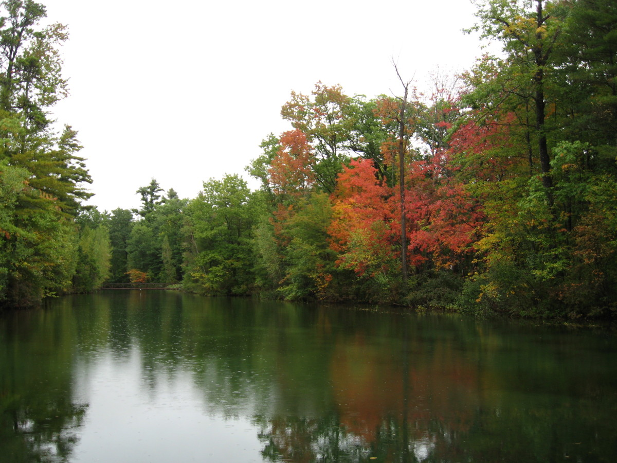 There are raindrops on the pond so a rather dull day for colorful foliage.