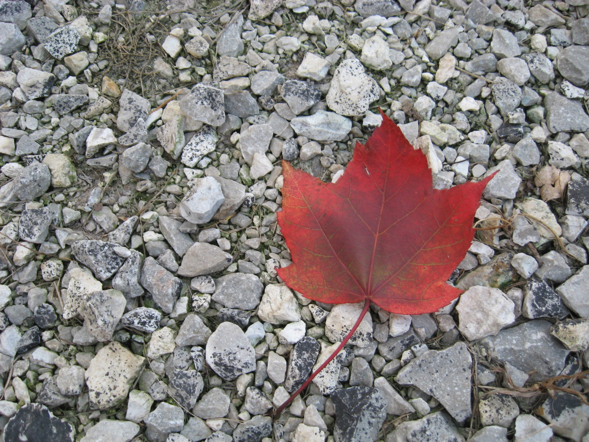 Look for leaves with different backgrounds to set them off. Here I've used a gravel background.