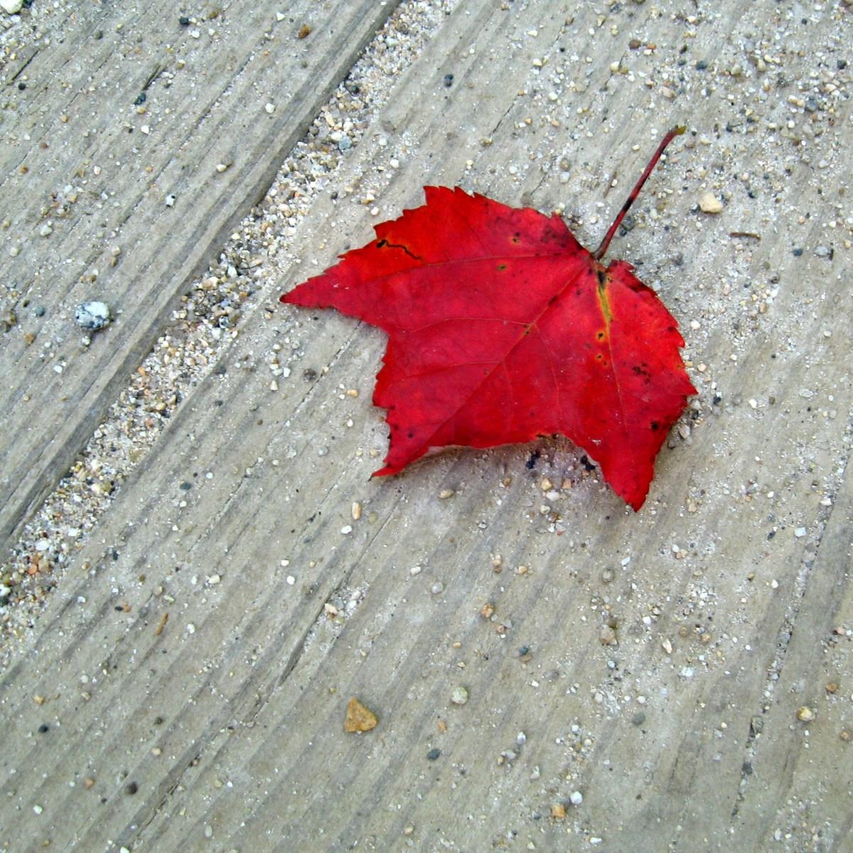 fall-photography-walk