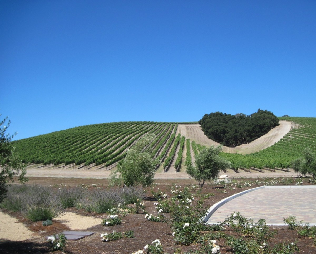 Heart Hill  is a grove of oak trees which stands in the midst of the Niner Estates Vineyards in Paso Robles.  The trees have been there in this heart shape since long before the grapes were planted.