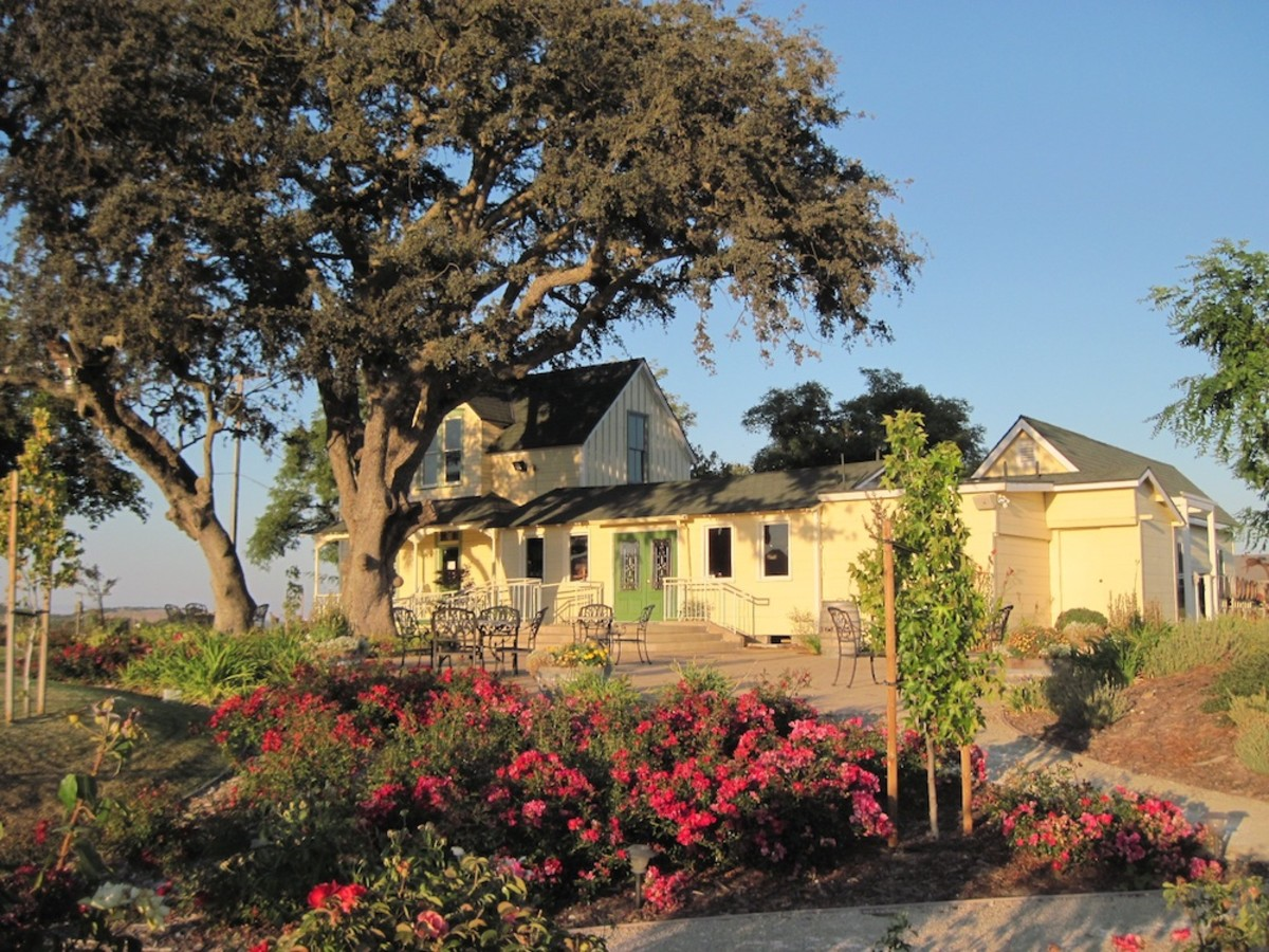 This oak gives shade to visitors of the Veris Tasting Room on Bethel Road in Templeton