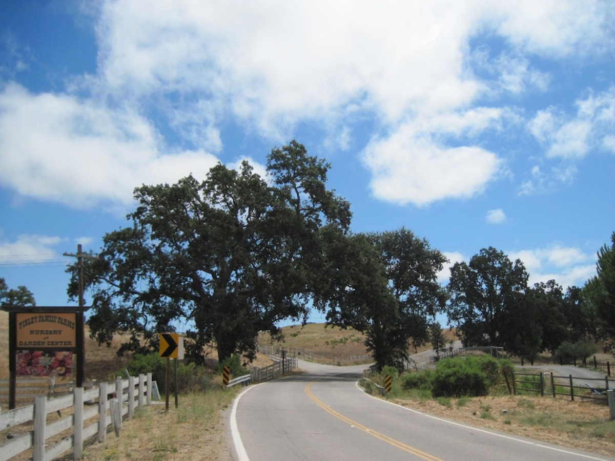 This was taken on El Pomar Road near Finley Family Farms in rural Templeton. It's proof that around almost every bend in the rural North County, you will find oaks.
